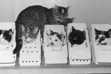Conoce la historia de Félicette: la gata francesa que fue al espacio