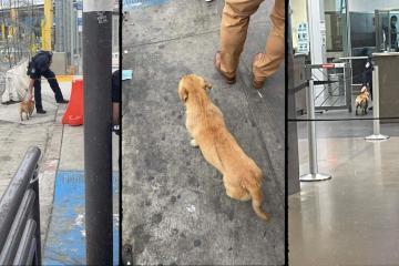 Viralizan video de perrito que cruza solo garita de Tijuana-San Diego