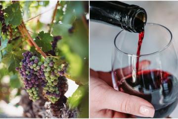 Ensenada will host the World Congress of Vine and Wine 2022