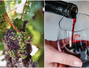 Se celebrará en Ensenada el Congreso Mundial de la Viña y el Vino...