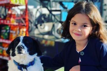 Kupata, el perro que se volvió héroe por ayudar a niños a cruzar...
