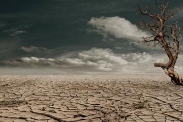 Greenpeace: Humanidad acabó con recursos naturales disponibles...