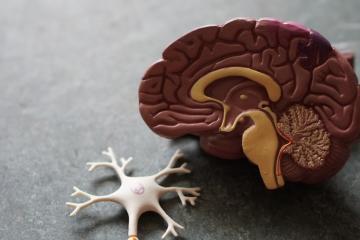 Estudio revela que COVID-19 podría provocar enfermedades...