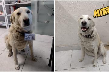 Conoce a Matute: el perrito jefe de seguridad de una farmacia