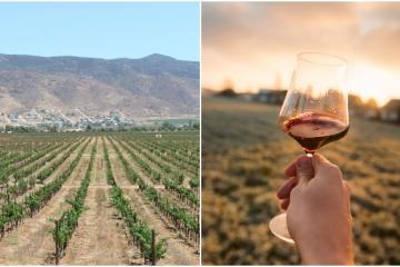 Valle de Guadalupe among the top 5 wine regions of 2021