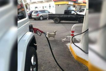 ¡Conoce a Gasolin! El empleado perruno de una gasolinera en Baja...