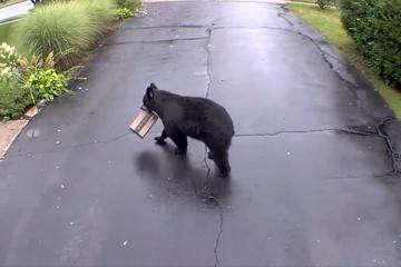Viral: paquete a domicilio de Amazon es robado por un oso