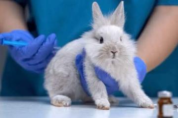 Queda prohibido usar animales para experimentos de cosméticos:...