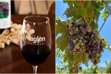 Vinos bajacalifornianos continúan recibiendo reconocimientos a...
