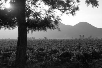 Memoria y Paisaje Cultural en el Valle de Guadalupe