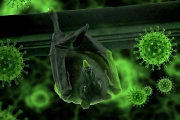 Identifican virus similar al covid en murciélagos de Laos