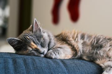 Sacrifican a gatitos en China por estar infectados de covid-19