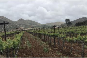 El Valle de Guadalupe en Baja California: ¿La ruta del vino o la...