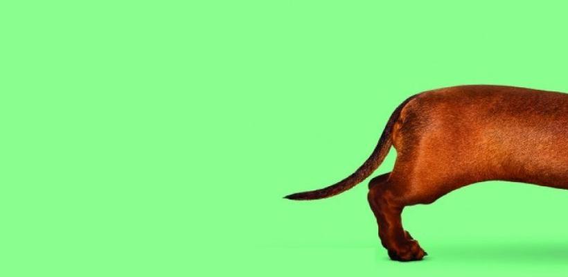 Estrenan trailer de Wiener-Dog