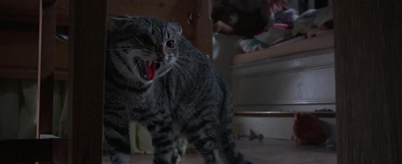 El Ojo del Gato - Trailer Oficial