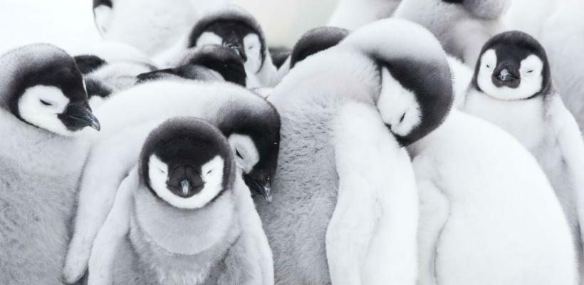 La Marcha de los Pingüinos 2   Top de críticas, reseñas y calificaciones