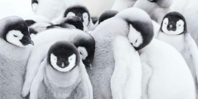 La Marcha de los Pingüinos 2 | Top de críticas, reseñas y calificaciones
