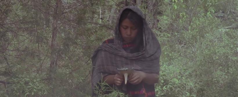 Raíces de Tlaxiaco - Pulque Bendito (video oficial)