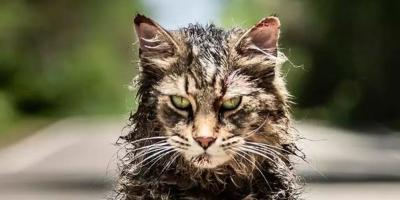 Fallece el gato que interpretó a Churchill en Cementerio Maldito