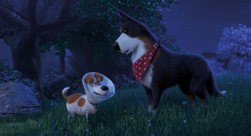 The Secret Life of Pets 2 (2019)