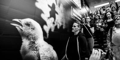 Joaquin Phoenix producirá documental vegano sobre la crueldad ejercida hacia los animales