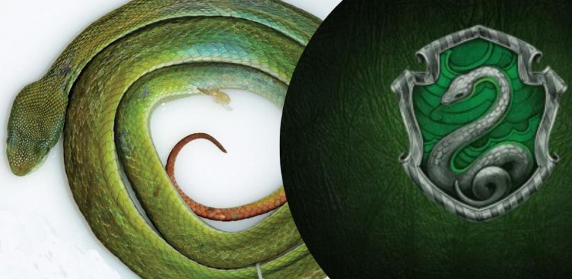 Harry Potter: Científicos descubren una nueva serpiente y la nombran Salazar Slytherin