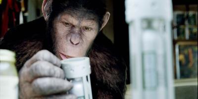 ¡Se vuelve realidad El Planeta de los Simios! Monos roban muestras de COVID-19 de un laboratorio