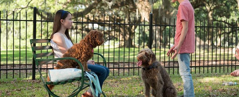 Una Mente Canina - Tráiler oficial