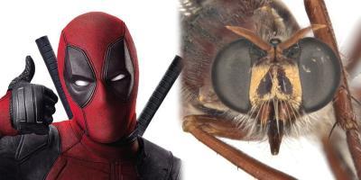 Insectos de Australia son nombrados a partir de Stan Lee, Deadpool y otros personajes de Marvel