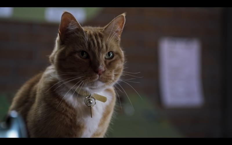 Como Perros Y Gatos 3: Patas Unidas (2020)