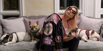 Lady Gaga ofrece medio millón de dólares por sus perros robados