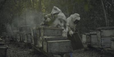¿Qué les pasó a las abejas?   Top de críticas, reseñas y calificaciones