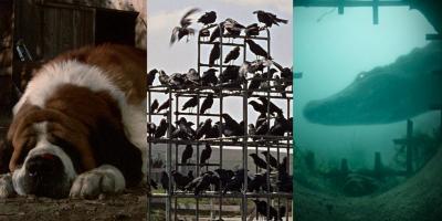 Películas del hombre contra la naturaleza: Cuando los animales son los villanos