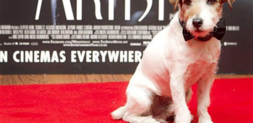 Fallece Uggie, el perro de El Artista