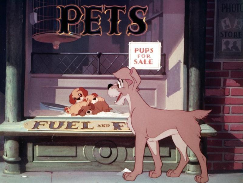 © 1955 - Walt Disney Studios. All rights reserved.