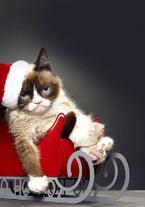 Grumpy Cats Worst Christmas Ever