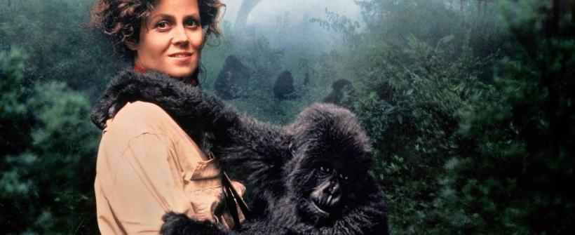 Gorilas en la Niebla Trailer